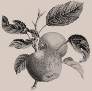 Página web Sideral - Ecodiseño